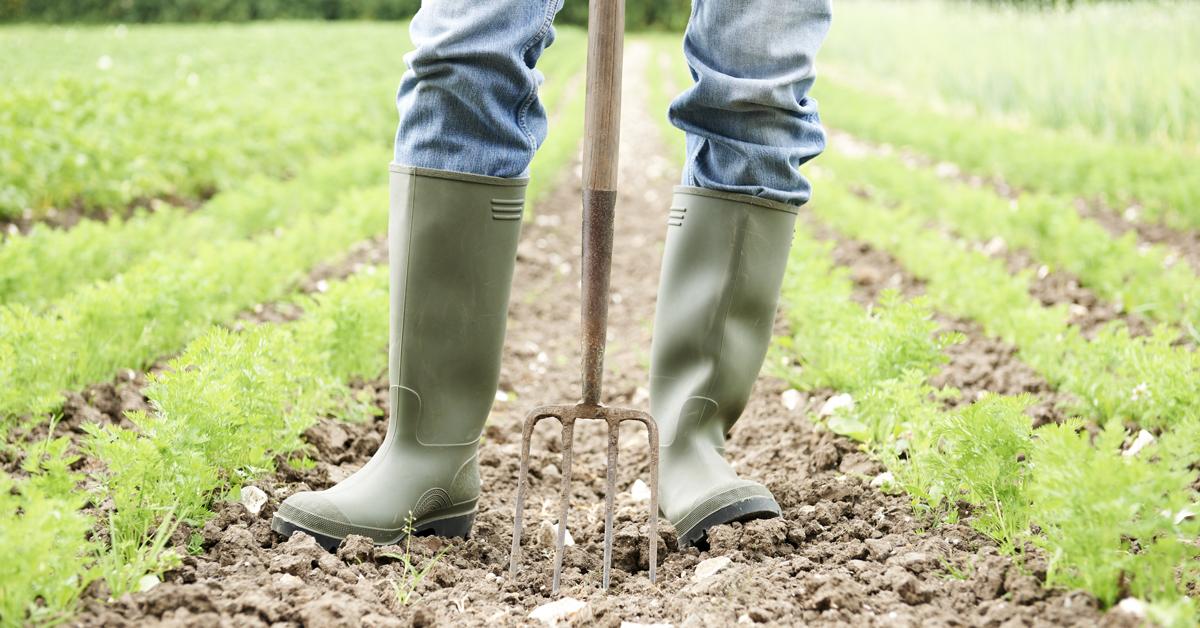 Europa: un miliardo di euro per i finanziamenti agricoli con priorità ai giovani
