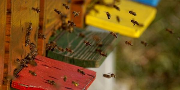 Hiveguard: Il terzo occhio degli apicoltori