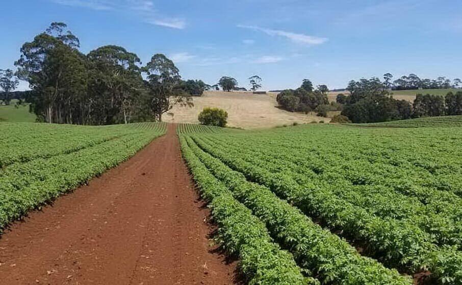 Blocco di contributi a 300 agricoltori sardi per problemi burocratici