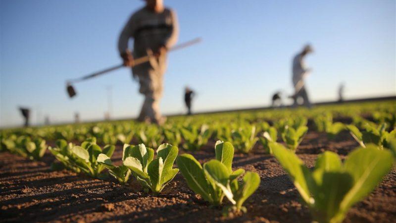 campo coltivato