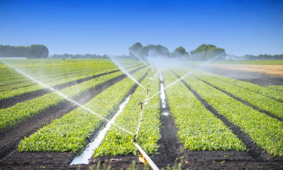 Il Consorzio di Bonifica della Sardegna Meridionale ha deciso di erogare l'acqua anche a chi non è in regola con i pagamenti