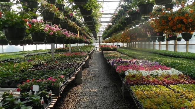 floricoltura
