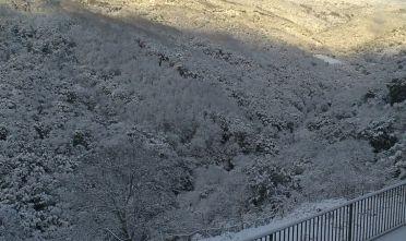 Emergenza gelate in Sardegna, la Regione si attivi per aiutare gli agricoltori
